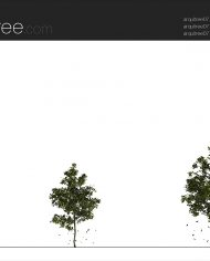 arquitree07_Detailed – Sheet – 2 – Realistic – no edges – Elevation