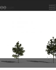 arquitree07_Detailed – Sheet – 4 – Realistic – no edges – perspective