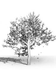 arquitree08_Detailed – 3D View – Hidden FINE
