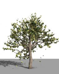 arquitree08_Detailed – 3D View – Realistic FINE