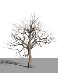 arquitree08_Detailed – 3D View – Realistic MEDIUM