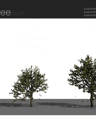 arquitree08_Detailed – Sheet – 4 – Realistic – no edges – perspective