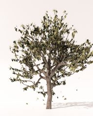 arquitree08_Detailed_Enscape
