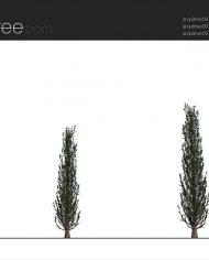 arquitree09 – Sheet – 2 – Realistic – no edges – Elevation