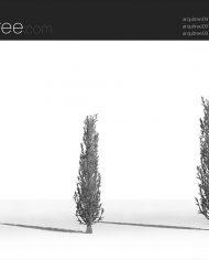 arquitree09 – Sheet – 3 – Hidden line Perspective