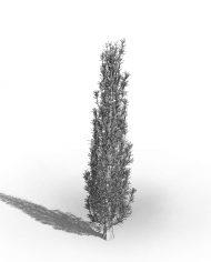 arquitree09_Detailed – 3D View – Hidden MEDIUM