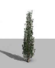 arquitree09_Detailed – 3D View – Realistic MEDIUM