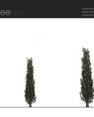 arquitree09_Detailed – Sheet – 2 – Realistic – no edges – Elevation