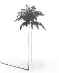 arquitree13 – 3D View – Hidden MEDIUM