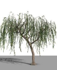 arquitree16 – 3D View – Realistic FINE