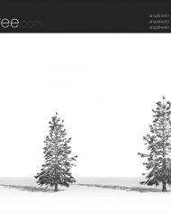 arquitree19 – Sheet – 3 – Hidden line Perspective