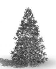 arquitree19_Detailed – 3D View – Hidden FINE