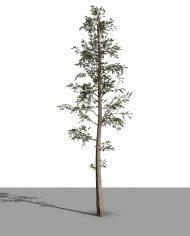 arquitree20 – 3D View – Realistic MEDIUM
