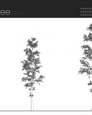 arquitree20 – Sheet – 1 – Hidden line Elevation