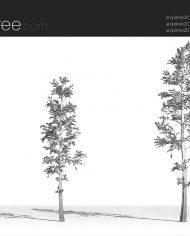 arquitree20 – Sheet – 3 – Hidden line Perspective