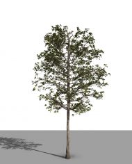 arquitree21 – 3D View – Realistic FINE