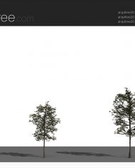 arquitree21 – Sheet – 4 – Realistic – no edges – perspective