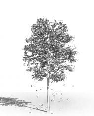 arquitree21_Detailed – 3D View – Hidden FINE
