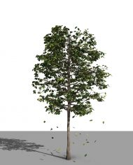 arquitree21_Detailed – 3D View – Realistic FINE