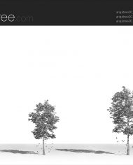 arquitree21_Detailed – Sheet – 3 – Hidden line Perspective