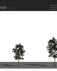 arquitree21_Detailed – Sheet – 4 – Realistic – no edges – perspective
