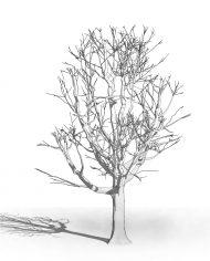 arquitree22 – 3D View – Hidden MEDIUM