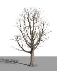 arquitree22 – 3D View – Realistic MEDIUM