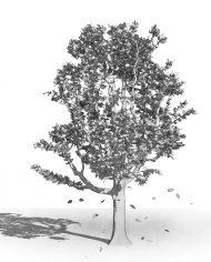 arquitree22_Detailed – 3D View – Hidden FINE