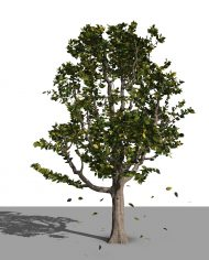 arquitree22_Detailed – 3D View – Realistic FINE