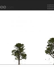 arquitree22_Detailed – Sheet – 2 – Realistic – no edges – Elevation