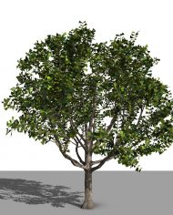 arquitree23 – 3D View – Realistic FINE