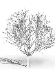 arquitree23_Detailed – 3D View – Hidden MEDIUM