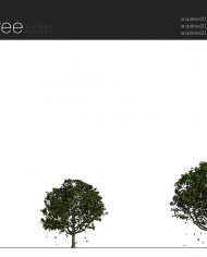 arquitree23_Detailed – Sheet – 2 – Realistic – no edges – Elevation