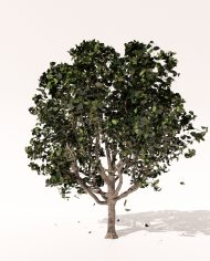 arquitree23_Detailed_Enscape