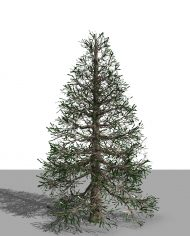 arquitree24_Detailed – 3D View – Realistic MEDIUM