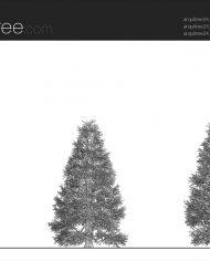 arquitree24_Detailed – Sheet – 1 – Hidden line Elevation