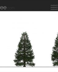 arquitree24_Detailed – Sheet – 2 – Realistic – no edges – Elevation