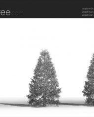 arquitree24_Detailed – Sheet – 3 – Hidden line Perspective