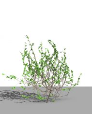 arquivy02 – 3D View – Realistic FINE