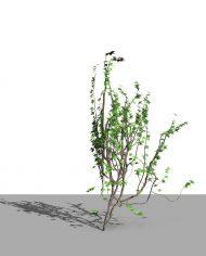 arquivy06 – 3D View – Realistic FINE