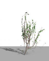 arquivy06 – 3D View – Realistic MEDIUM