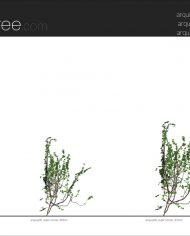 arquivy06 – Sheet – 2 – Realistic – no edges – Elevation